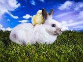 Påsk, kanin och kyckling — Stockfoto