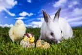 Easter, bunny and chicken — Zdjęcie stockowe