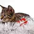 Christmas Kitten — Stock Photo #62823137