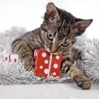 Christmas Kitten — Stock Photo #62823725