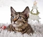 Christmas Kitten — Stok fotoğraf