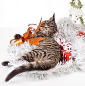 Christmas Kitten — Stock Photo