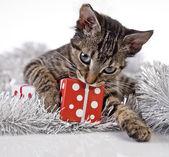 クリスマスの子猫 — ストック写真