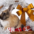 Christmas bunny and rabbit — Stock Photo #62895777