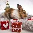 Christmas bunny and rabbit — Stock Photo #62895831