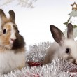 Christmas bunny and rabbit — Stock Photo #62895869