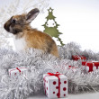 Christmas bunny and rabbit — Stock Photo #62895893