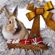 Christmas bunny and rabbit — Stock Photo #62895903