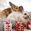 Christmas bunny and rabbit — Stock Photo #62896143