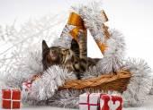 Christmas Kitten — Stock Photo
