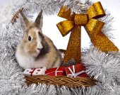 Kerstmis bunny en konijn — Stockfoto