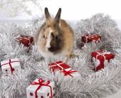 Christmas bunny and rabbit — Stock Photo