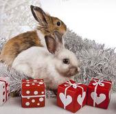 Christmas bunny and rabbit — Stock Photo