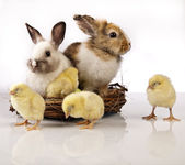 Easter, bunny and chicken — Stock Photo