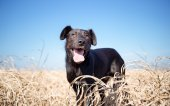 Black mixed breed dog outdoor portrait — Stock Photo