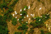 VANLONG RESORT, NINHBINH, VIETNAM - NOVEMBER 27, 2014 - Egrets flying nearby the mountain. — Stock Photo