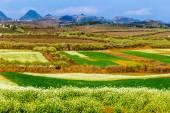 MOC CHAU PLATEAU, VIETNAM - FEBRUARY 5, 2014 - A plum plantation in early Spring. — Stock Photo