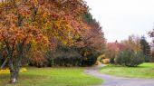 Path through rowan berry trees in a public park in Seinajoki Finland — Stock Photo