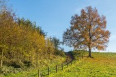A brown beech standing on on a dike in Holland — Stock Photo