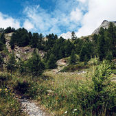 山树 — 图库照片