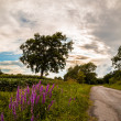 Lonely tree on a country road — Stock Photo #53440505