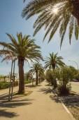Palms on the path in front of the sea of Italy — Stockfoto