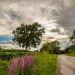 Lonely tree on a country road — Stock Photo #66871913