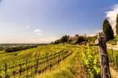 Grapevine fältet på den italienska landsbygden — Stockfoto