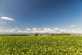 Green Fields of Italy — Stock Photo