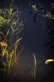 Underwater 4 — Stock Photo