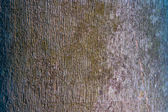 Tree and wood skin background close up — Stock Photo