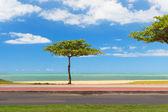 Almond tree on beach blue water and sky background, Vila Velha,  — Stock Photo