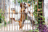 Twoo dogs dachshund playing in the yard — Stock Photo