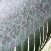 Greater Adjutant feathers — Stock Photo