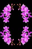 Phalaenopsis hybrid — Stock Photo