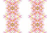 цветение цветок розовая плюмерия — Стоковое фото