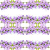Blossom violet flower — Stockfoto