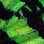 Green butterfly wing — Stock Photo