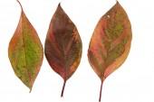 яркие осенние листья — Стоковое фото