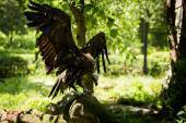 Vulture in wild — Stock Photo