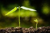 Grün sprießen, wachsen aus samen — Stockfoto