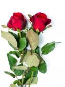Rose rouge sur fond blanc — Photo