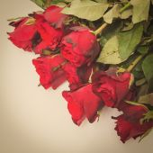 Red rose with retro filter effect — Stock Photo