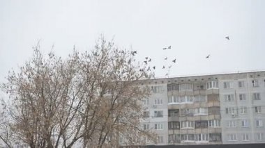 Pigeons fly over the city — Stock Video