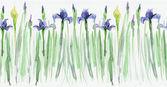 Seamless floral borders. Stripe with irises — Stock Photo