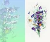 Bouquet of  violets. — Stock Photo