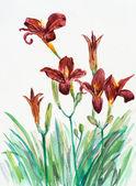 Bukiet lilie czerwone. — Zdjęcie stockowe