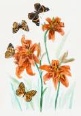 Bouquet of  lilies & butterflies — Stockfoto