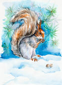 The squirrel gnaws notelets. New Year's and Christmas motive. Snow winter. — Stock Photo