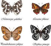Russian butterflies. — Stock Vector